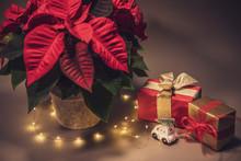 Weihnachtsmotiv Mit Weihnachtsstern