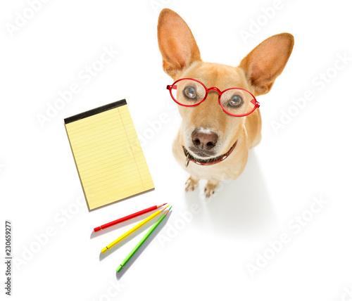 Fotobehang Crazy dog office worker businessman dog
