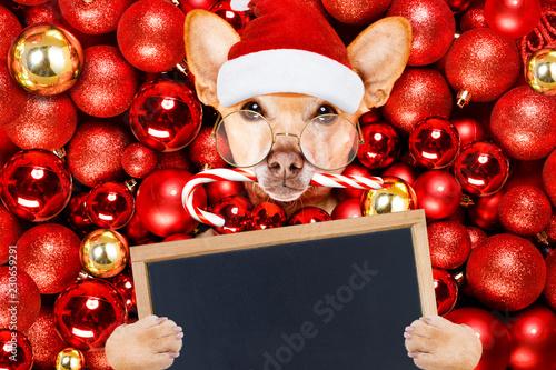 Fotobehang Crazy dog christmas santa claus dog and xmas balls