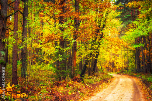 Photo Stands Road in forest Autumn nature landscape with forest road