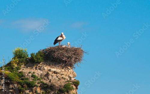 Photo nido de pareja de cigüeñas en lo alto del cielo azul, foto con espacio para text