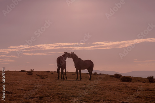 Spoed Foto op Canvas Wild Horses at Sunset in the High Desert