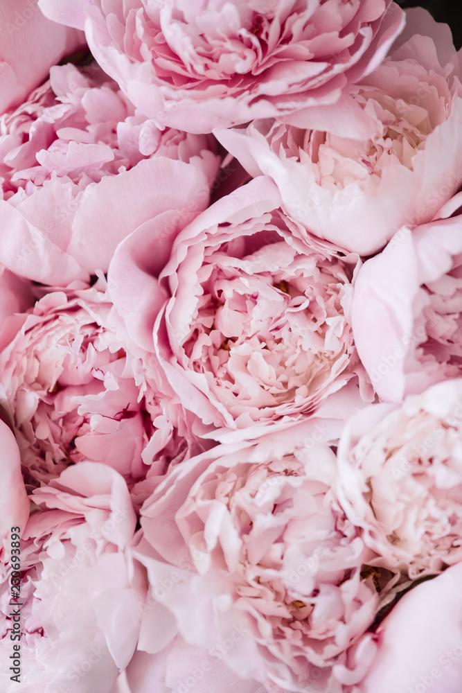 Piękna aromatyczna świeża kwitnie oferty różowa peoni tekstura, zamyka w górę widoku