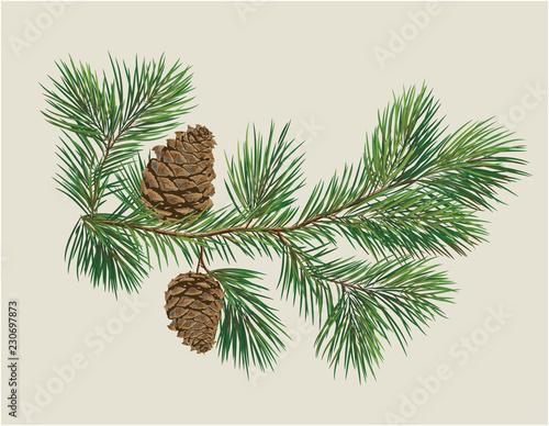 Fototapeta Branch of Christmas tree with pine cones obraz