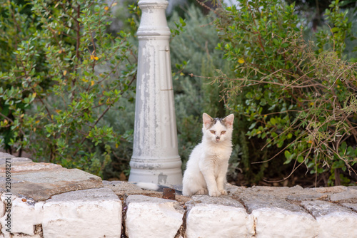 Photo  A beautiful wild, stray kitten with dirt on his nose from digging, on the island of Hydra in Greece