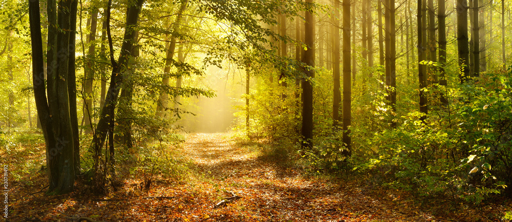Fototapeta Footpath through Enchanted Forest in Autumn, Morning Fog illuminated by Sunlight