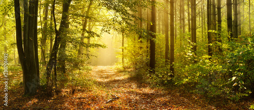 Fotobehang Bos Footpath through Enchanted Forest in Autumn, Morning Fog illuminated by Sunlight