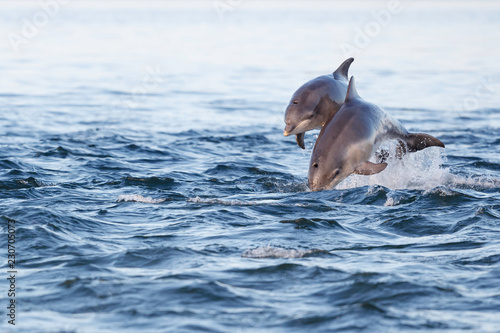 Foto auf Leinwand Delphin Happy young dolphin