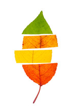 Concept Of Change Seasons. An Autumn Leaf Divided To Four Colors, Isolated On White Background