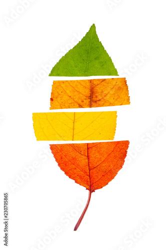 Fotografie, Obraz  Concept of change seasons