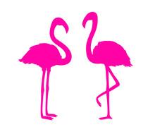 Flamingos On White. Colored Ca...