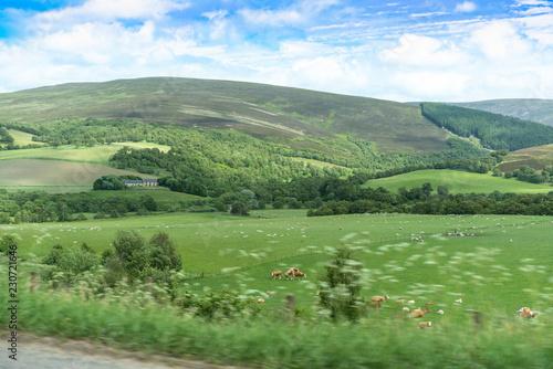 Fotobehang Wit Zufällig gesehen bei Spazierfahrt durch Schottland Rinder machen Liebe