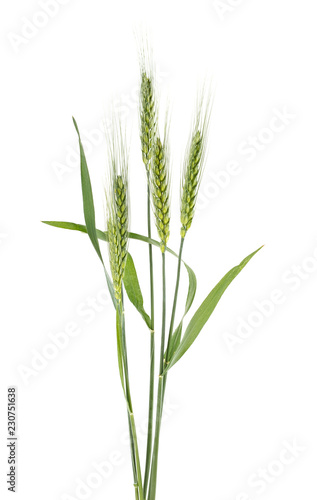Fotografia  Green spikelets of wheat isolated on white background