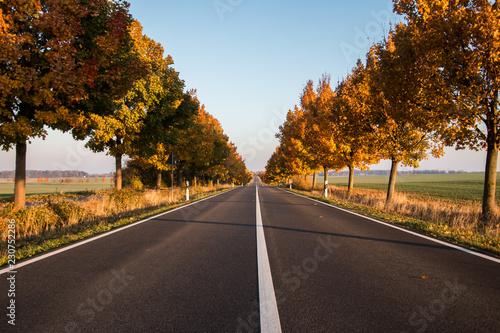 Obraz na plátně  Herbstliche Straße Herbst