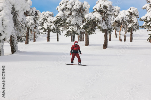 Snowboarding on a forest ski slope. White winter mountain landscape