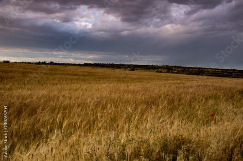 Fotobehang Lavendel paisaje natural con cielo