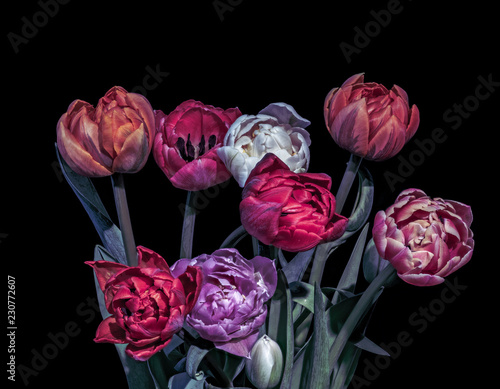 Fotobehang Bloemen Fine art floral still life dark colorful macro of a bouquet/bunch/set of tulip blossoms, black background,vivid colors, red, pink, orange, violet, white,vintage painting style