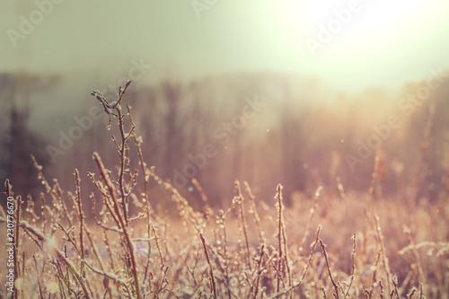 Autumn meadow