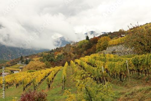 Foto op Aluminium Honing vineyard in autumn in South Tyrol