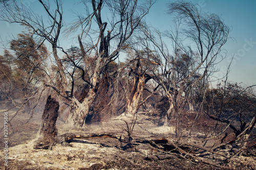 Photo Burnt trees after a forest fire