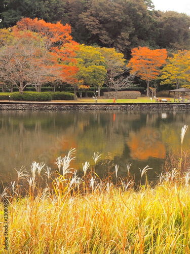 Foto op Aluminium Oranje 秋の21世紀の森と広場風景