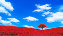Colorful Red Leaves And Tree Landscape On Blue Sky, Autumn  Concept Wallpaper