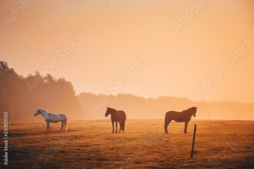 Spoed Foto op Canvas Horses together in orange autumn morning mist
