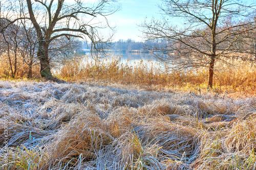 Fotografie, Obraz  Seeufer mit Schilf bei erstem Frost