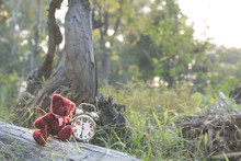 Teddy Bear Doll And Retro Alarm Clock With Tone