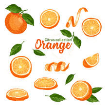 Color Set Of Hand Drawn Tropical Citrus Fruit. Orange. Ink Sketch Style. Good Idea For Templates Menu, Recipes, Greeting Cards.