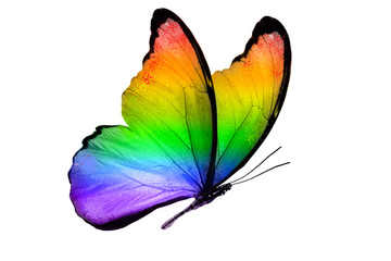 beautiful multicolor butterfly isolated on white background