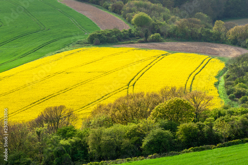 Deurstickers Cultuur Elevated view of a field of rapeseed with tractor tracks