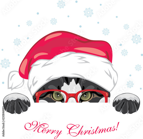 Fotografie, Obraz  Peeping funny cat in a red glasses and Christmas cap