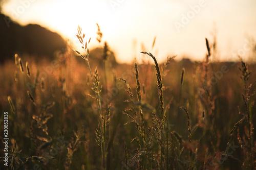 Fotobehang Gras Grashalme im Sonnenlicht