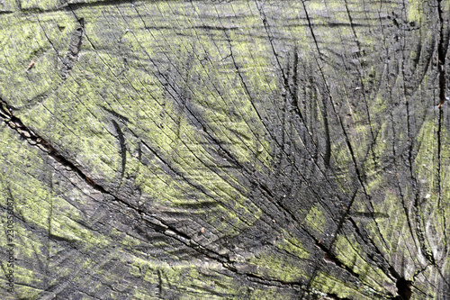 tree log slice background with green moss.