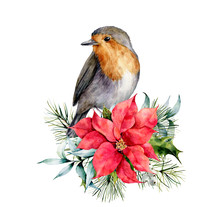 Watercolor Christmas Card With Robin And Winter Design. Hand Painted Bird With Poinsettia, Mistletoe, Fir Branch And Holly Isolated On White Background. Holiday Symbol For Design, Print.