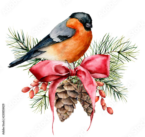 Fototapeta Watercolor Christmas card with bullfinch and winter design