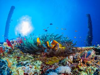 Red Sea Underwater World