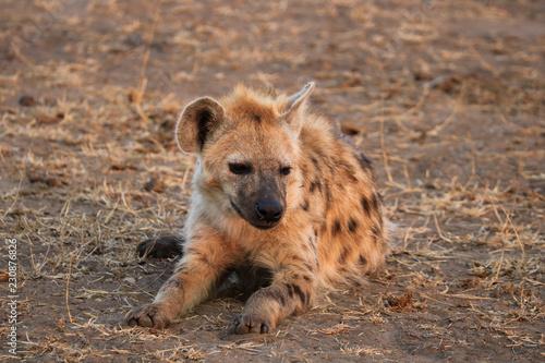 Foto op Aluminium Hyena yenne qui a faim