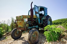 Old Tractor In Field