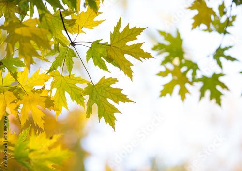 Türaufkleber Orange Autumn forest on sunny day
