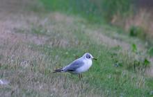 Small Bird In Profile