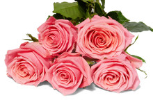 Five Pink Roses On White Backg...