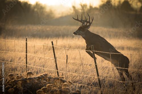 Deurstickers Hert Backlit Buck Jumper