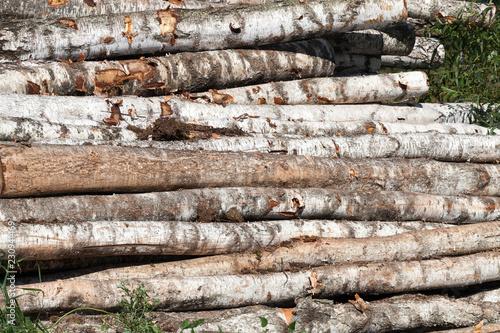 Tuinposter Berkbosje birch wood