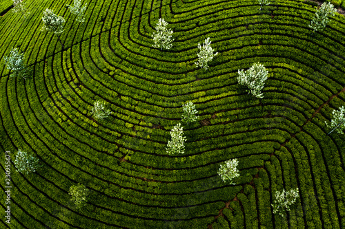 Drone photography of Munnar tea Plantation in kerala, India Canvas Print