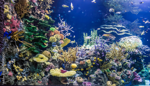 Colourful ocean aquarium with motley fish, corals, plants and rocks.