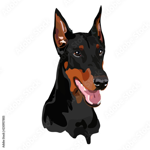 Dobermann vector illustration Canvas Print