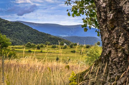 Spoed Foto op Canvas Grijze traf. Summer Carpathians
