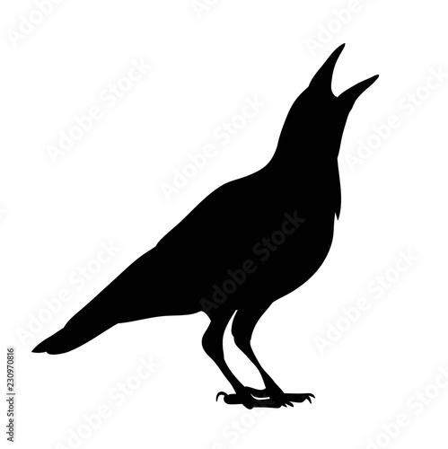 silhouette of crows, birds Fototapet